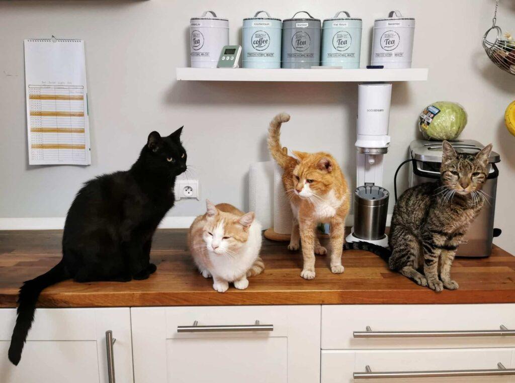varios gatos encima de un mueble