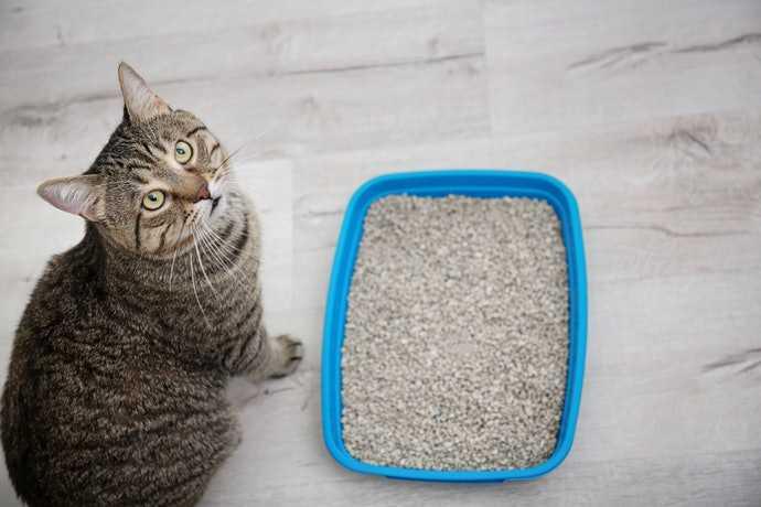 mejor arenero para gatos bandeja abierto