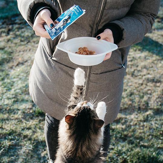 Comida húmeda gato