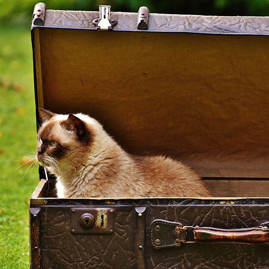 Gato maleta. Arenero reciclable
