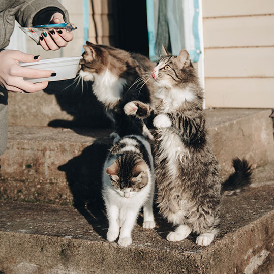 Gatos comida húmeda