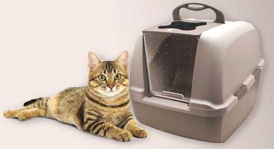 mejor arenero cerrado con tapa para gatos