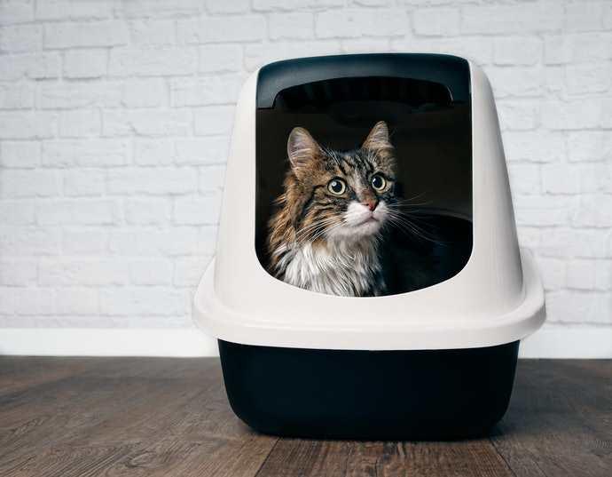 arenero para gatos tipo caja
