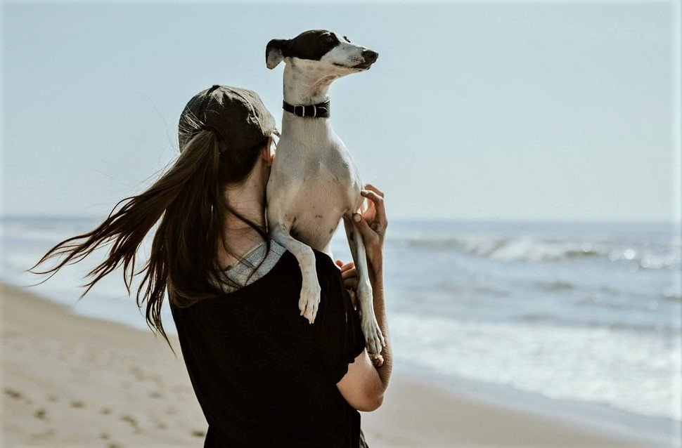 playa para perro galgo