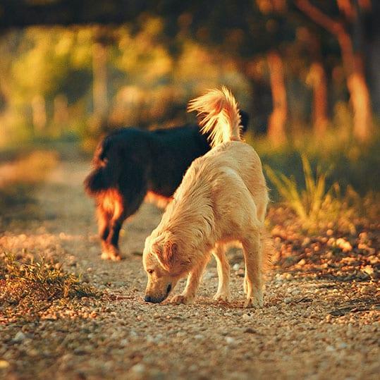 perros camino de piedras