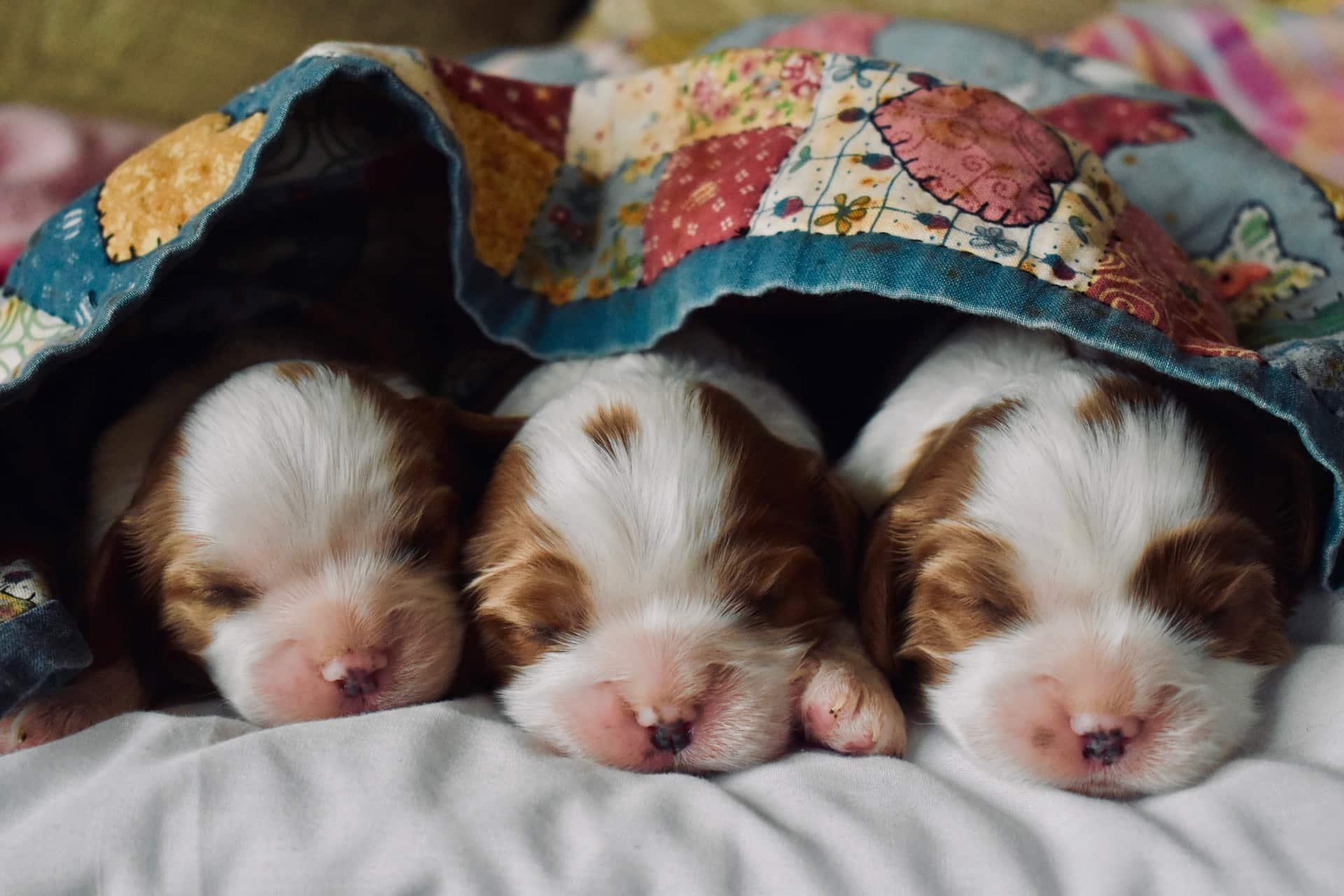3 perros recién nacidos