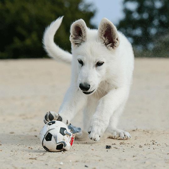 Playas para perros. Perro jugando al balón en la arena