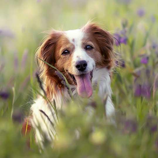 perro hierbas primavera