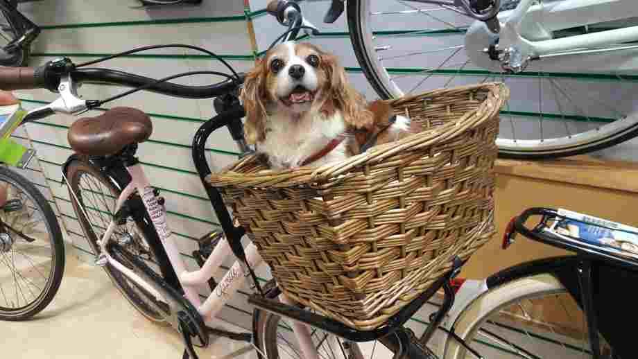 cesta para perros en bici