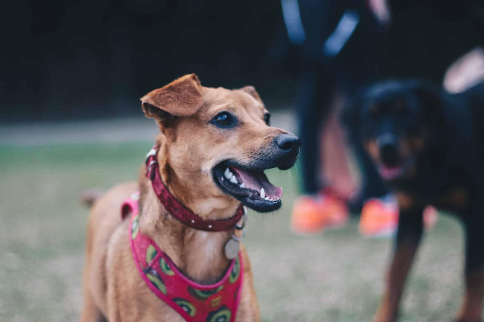 collares de adiestramiento para perros