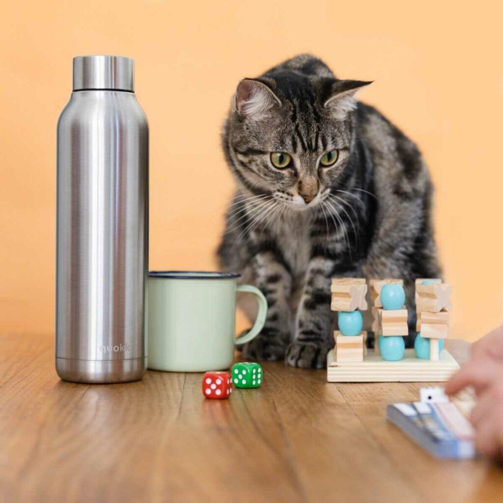 Juegos y juguetes para gatos