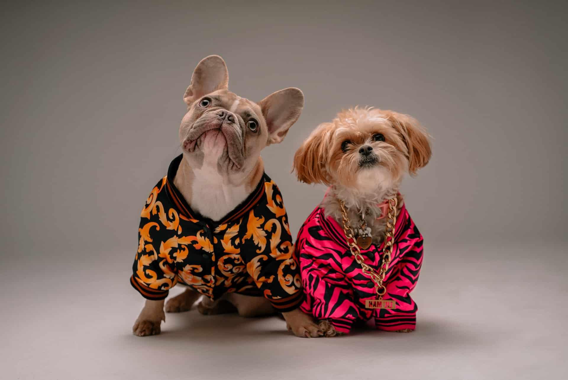 Dos perros con trajes llamativos
