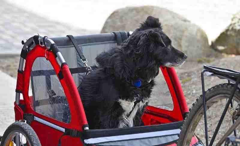 remolque bici para perros