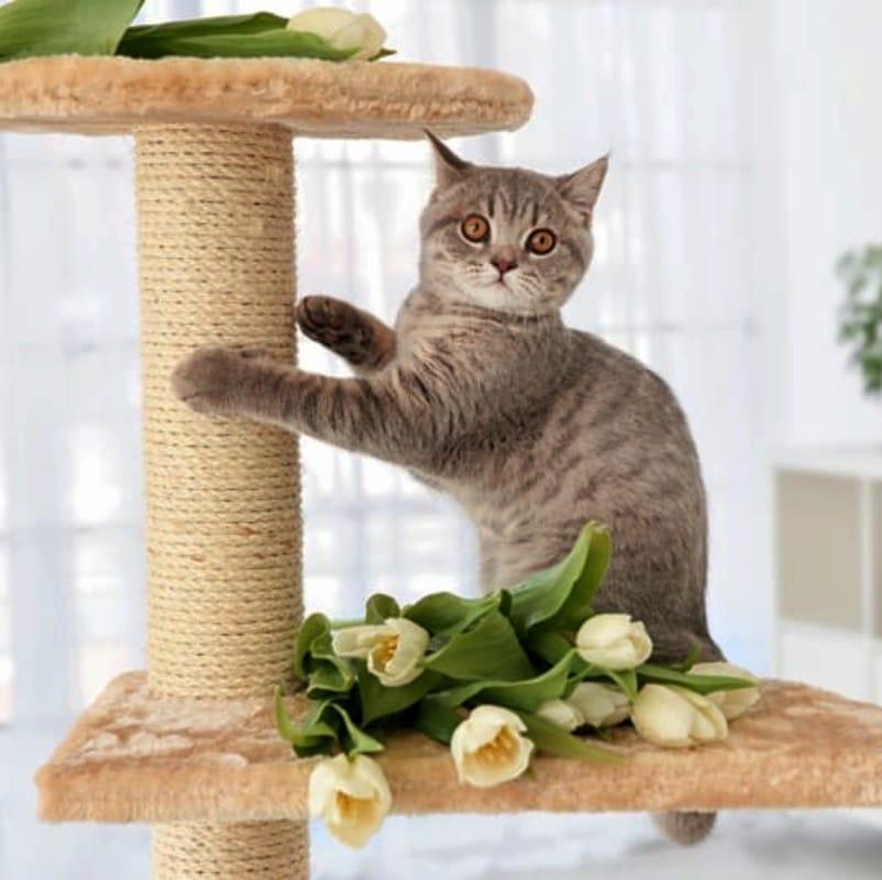 arbol para gatos