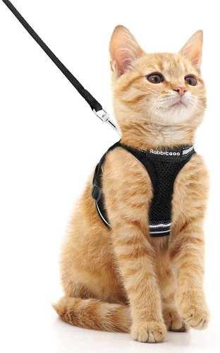 gato con arnes tipo chaleco