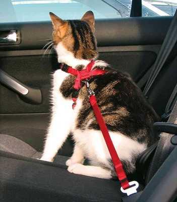 gato con arnés de seguridad en el coche
