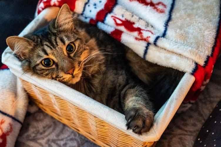 cama para gato en una cesta de mimbre