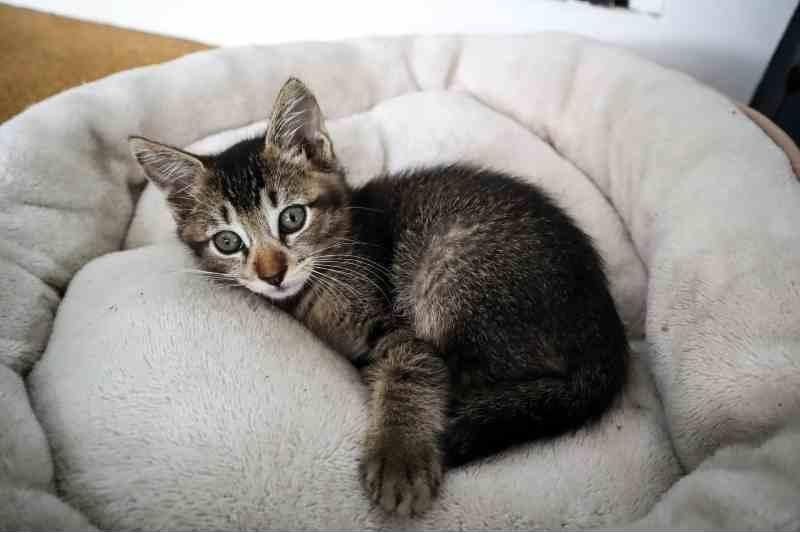camas para gatitos