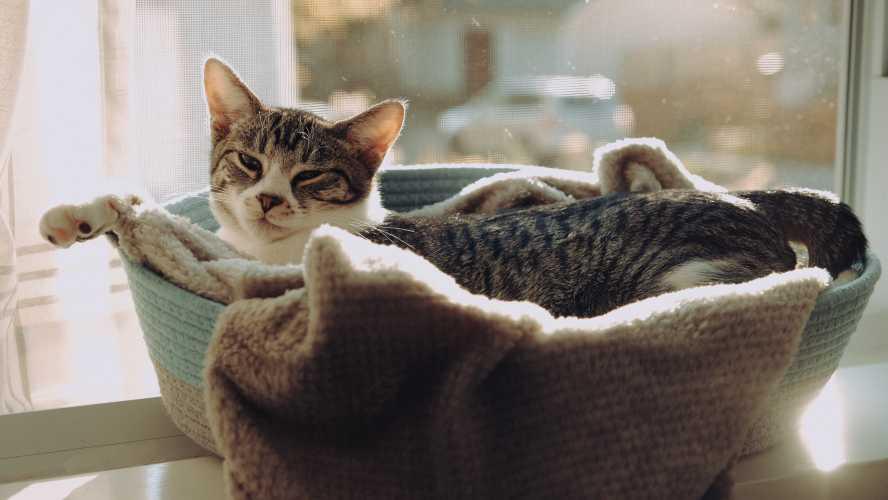 camas para gatos caseras con una cesta