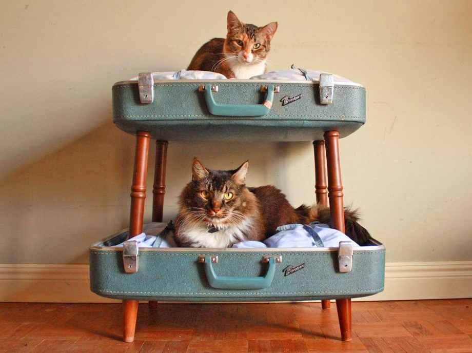 cama para gatos casera hecha con una maleta