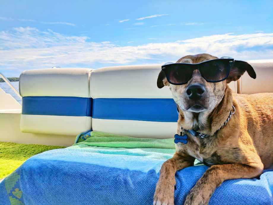 camping con perros en el mar