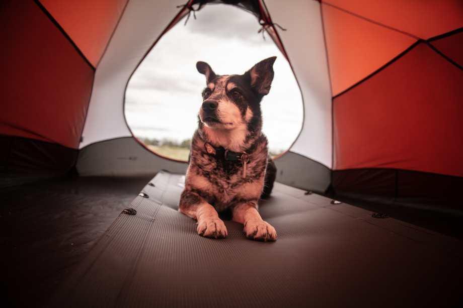 perro en tienda de campaña durante un camping