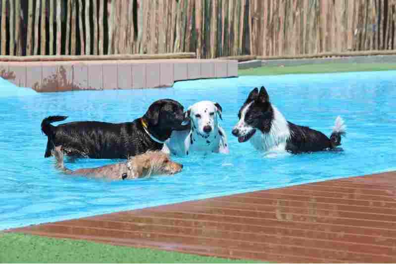 camping piscina para perros