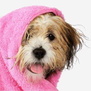 Champú para perros con dermatitis: el aliado de su piel