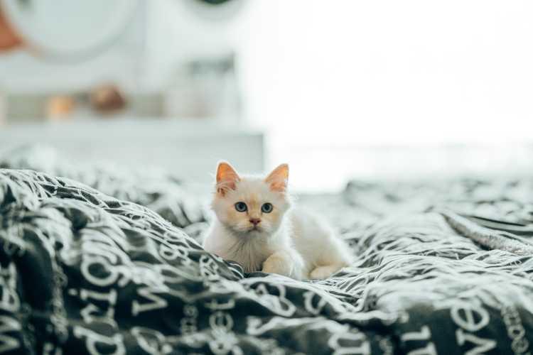 gatito tumbado en una cama