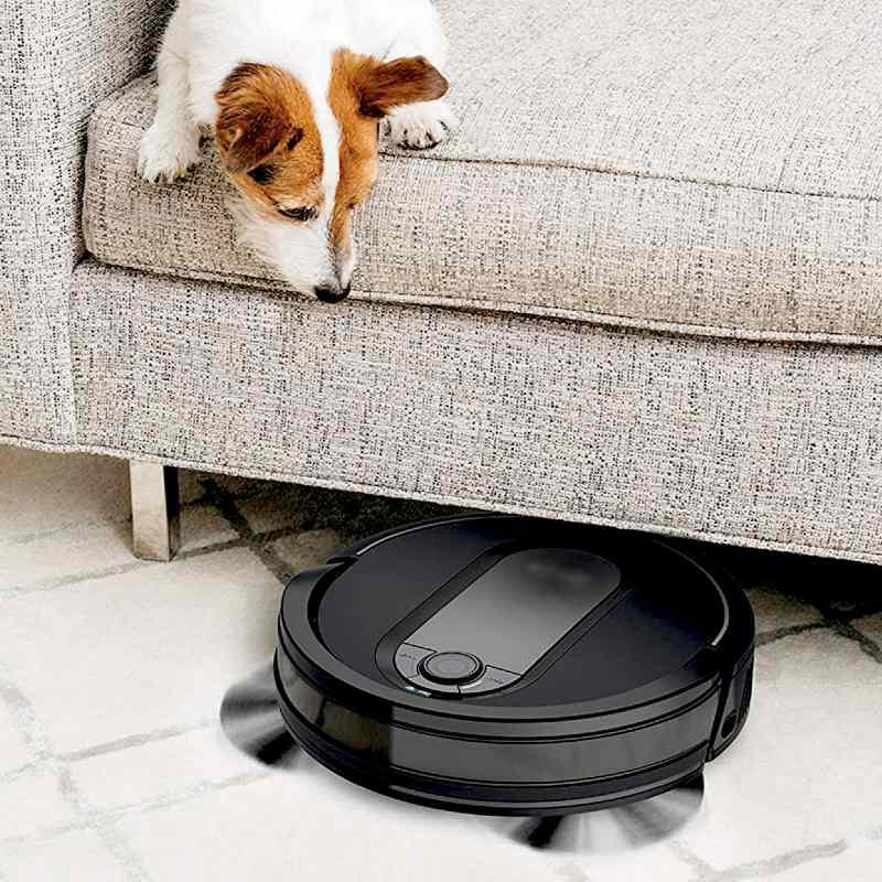 perro mirando irobot para mascotas