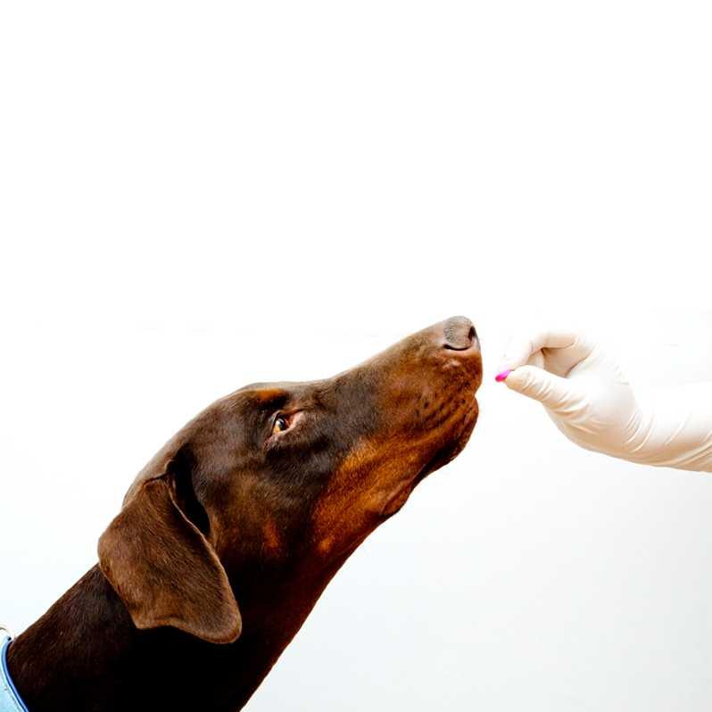 pastillas para desparasitar perros