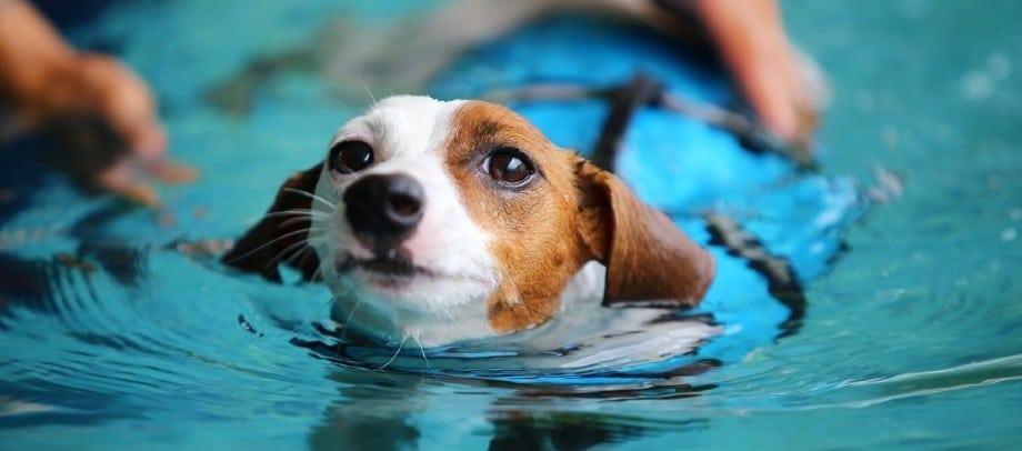 cahorro nadando en piscina para perros