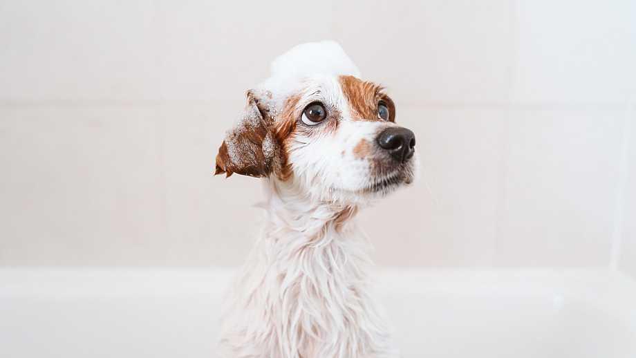 perros cosmética de baño