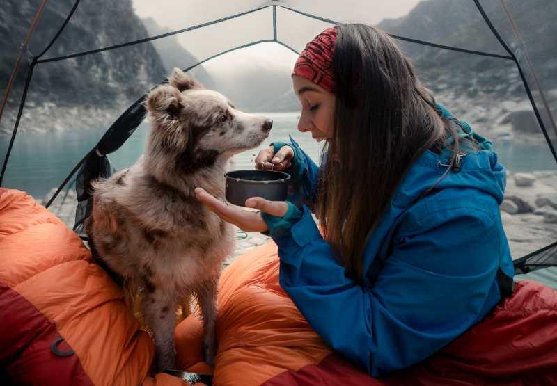 camping con perros en verano