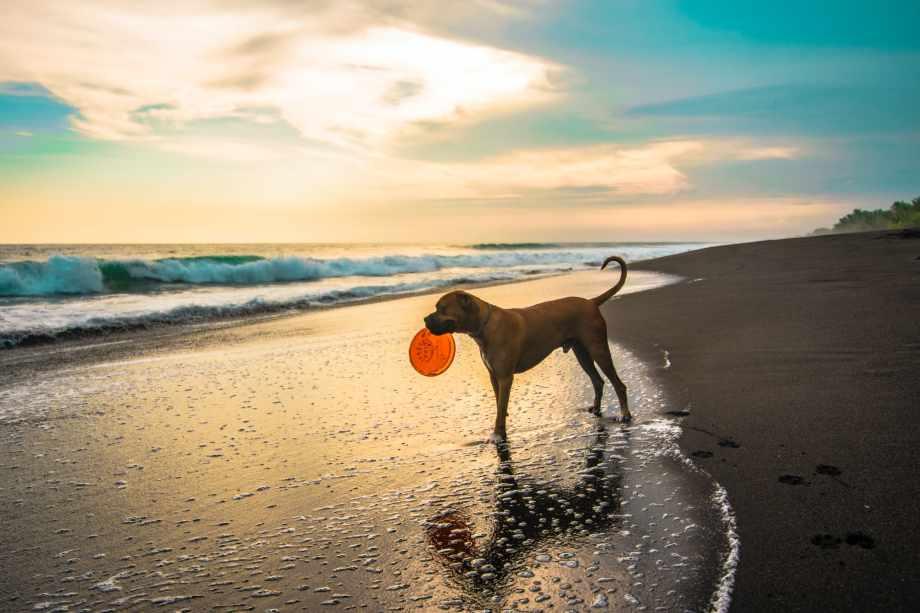 playas para perros en verano