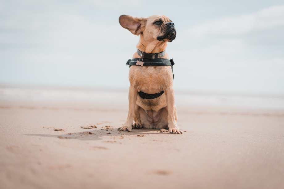 cuidados perros en verano