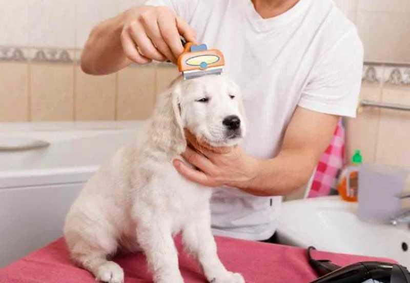 corte y cepillado de pelo perros en verano