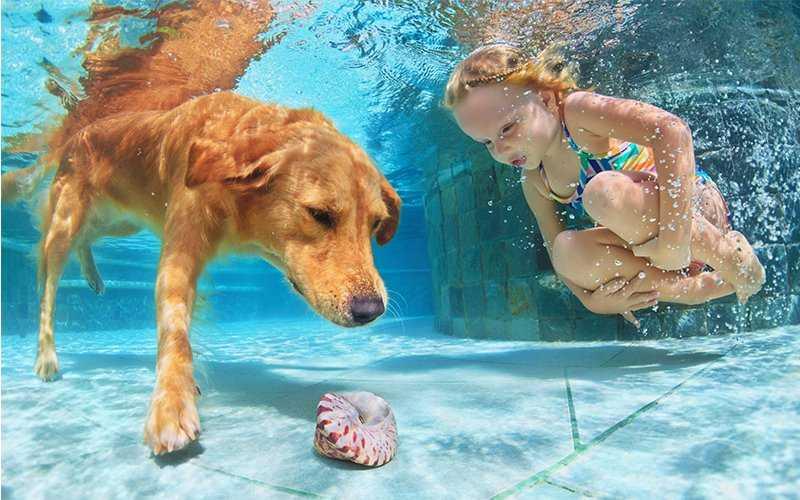 perro en agua de piscina con niña