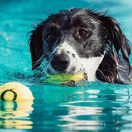 piscinas para perros