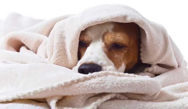 sintomas de parásitos en perros pastillas