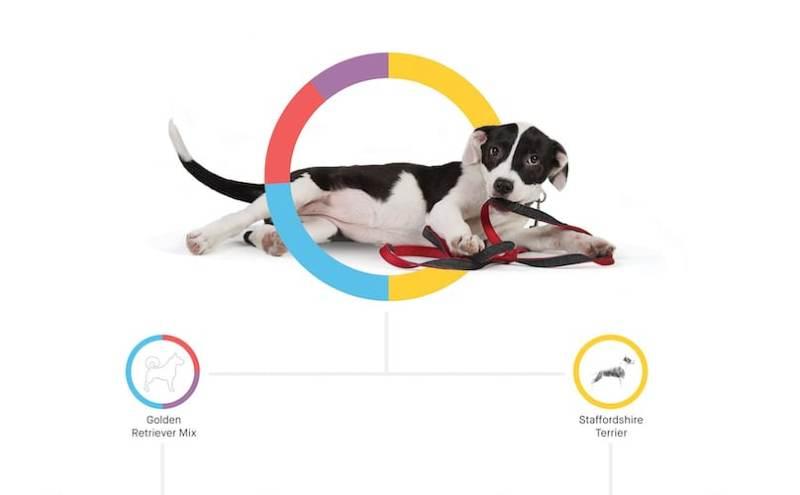perfil ADN en razas de perros