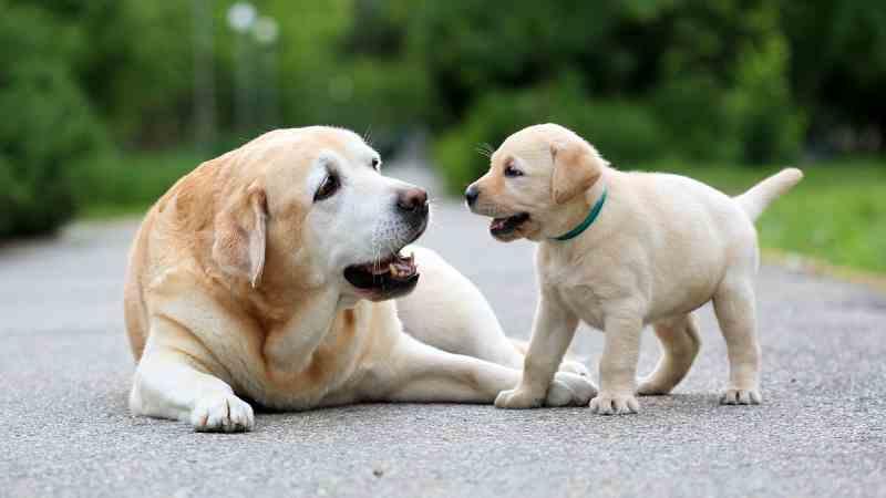 ADN y genética en perros