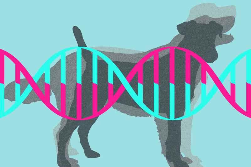 Qué es el ADN de los perros