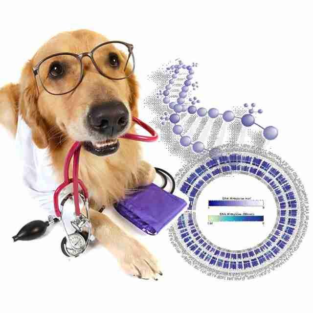 ADN en perros