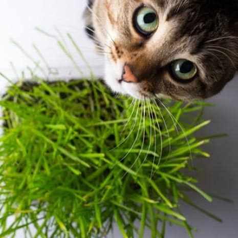 Productos calmar estrés en gatos