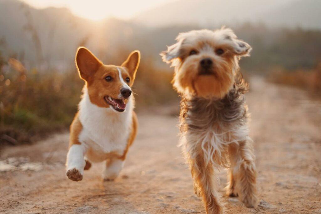 características perros mestizos