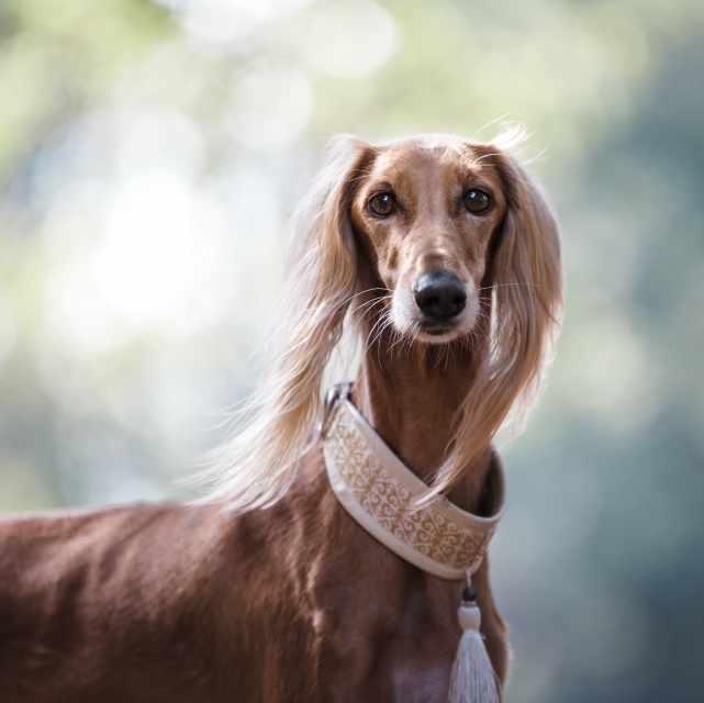 collares bonitos para perros fashion
