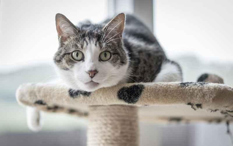 reducir estrés en gatos