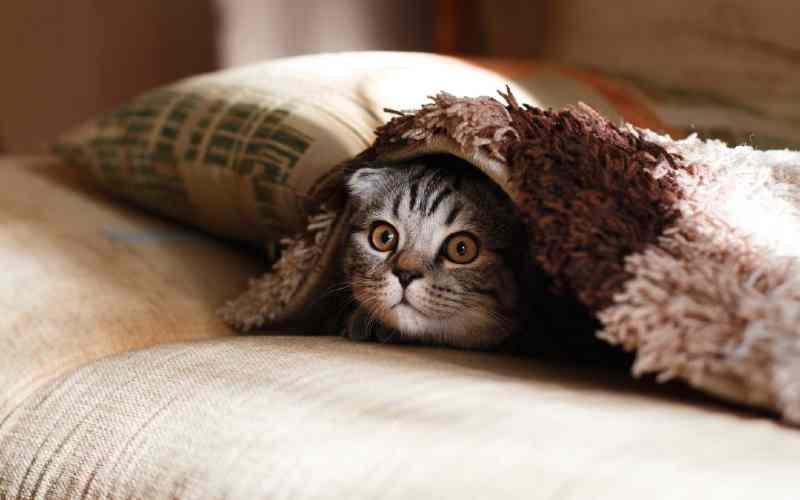 signos de estrés en gatos