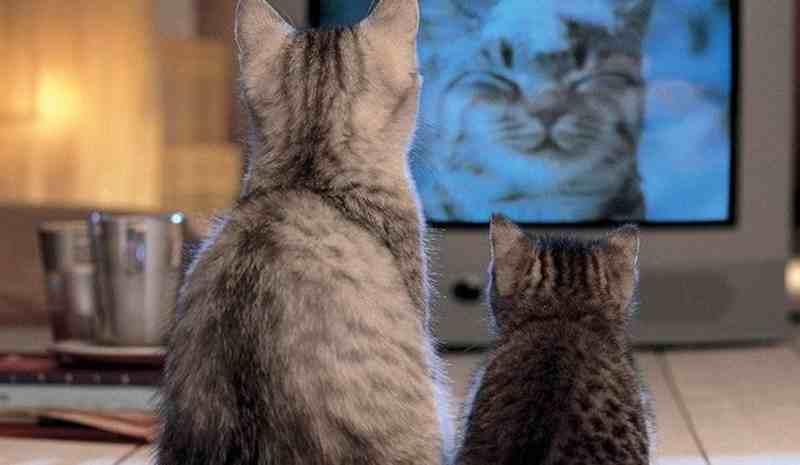 Gato ve la tele
